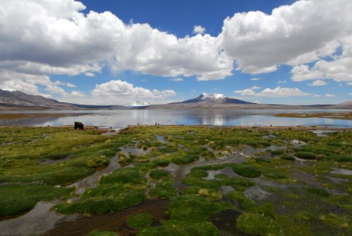 Lake Chungara in Lauca National Park, Chile
