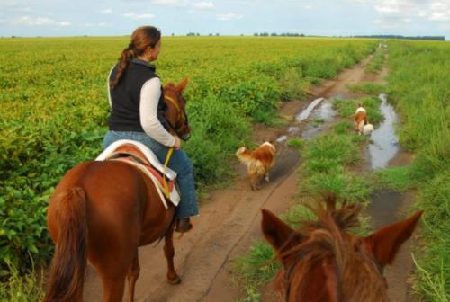 Riding through the Fields of Soybeans & Maize, Cordoba, Argentina
