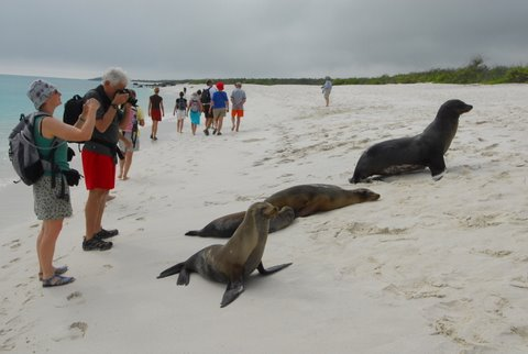 Wildlife Viewing in the Galapagos Islands